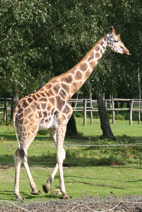 Thoiry for Zoo yvelines 78